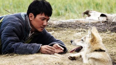 狼王:一个把狼变成哈士奇的男人
