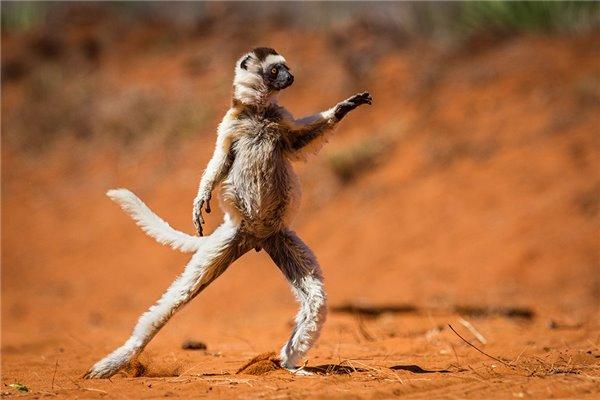 野生动物喜剧作品,都是摄影师们拼尽全力捕捉到的最精彩瞬间,小动物的