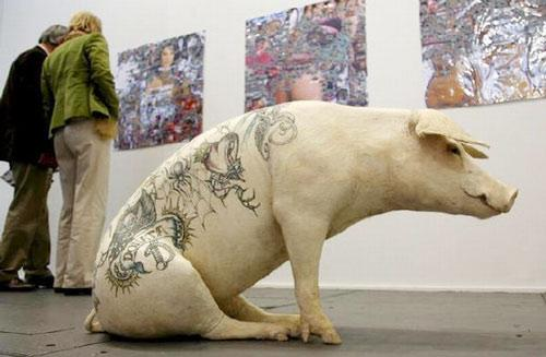 纹身猪价格不菲,猪猪们的新出路!