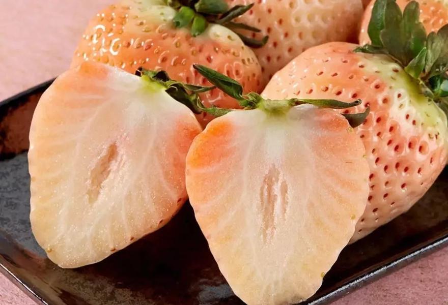 白草莓舌图片