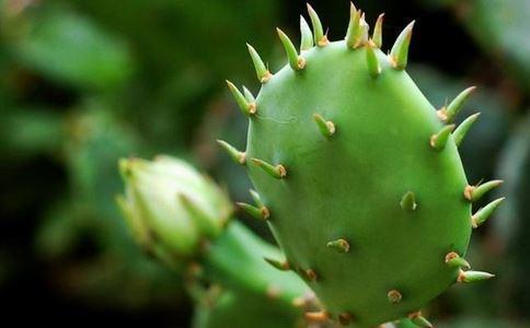 仙人掌还真是个宝,能降血糖降血脂还能延缓衰老!