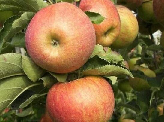 """被医生列入""""黑名单""""的4种水果,严重可伤害五脏六腑,特别是第3种,夏天要少吃!"""