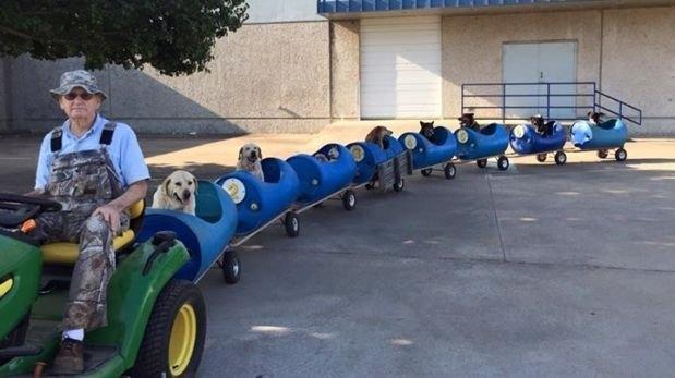 老爷爷收养很多只流浪狗,然后自制了遛狗小火车