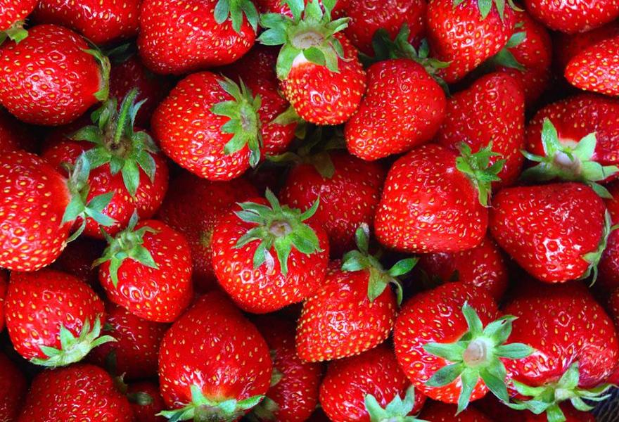 白草莓叫什么图片