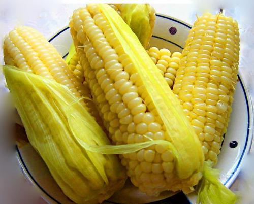 """玉米胚芽营养""""赛黄金""""?玉米最有营养的部分"""